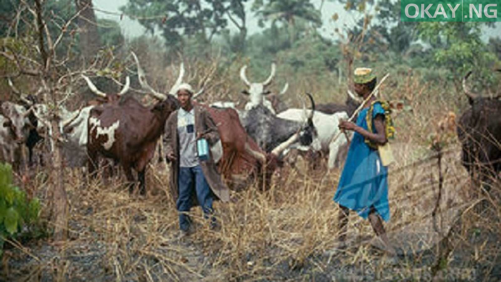Photo of Igbo Group Gives Herdsmen Ultimatum to Leave South East
