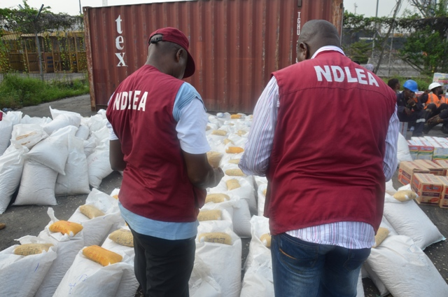 NDLEA Seizes 24 Pallets of Most Dangerous Indian Hemp Specie in Adamawa