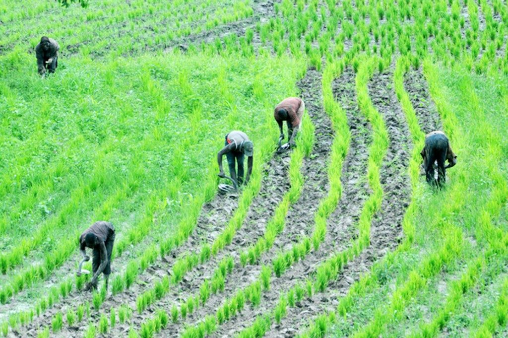 Photo of Bauchi State Govt. Selects 16,000 Rice Farmers for Anchor Programme