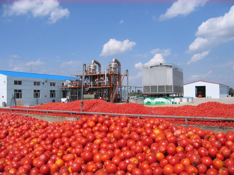 Photo of Katsina State Government Awards N500m Contract for Tomato Paste Processing Plant