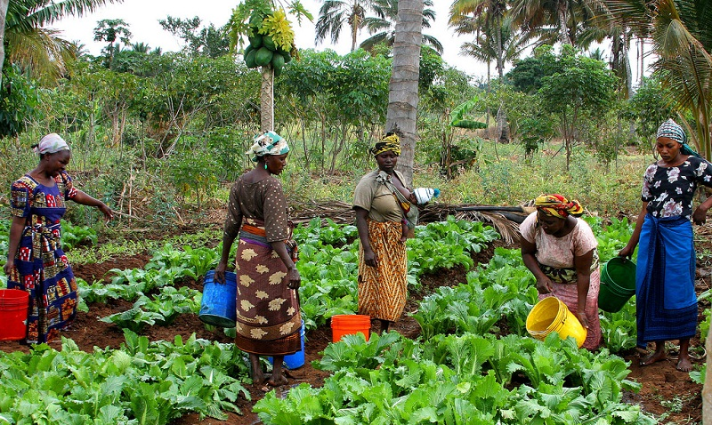 Women in Agriculture - Zamfara State Introduces New Farming Programme for Women