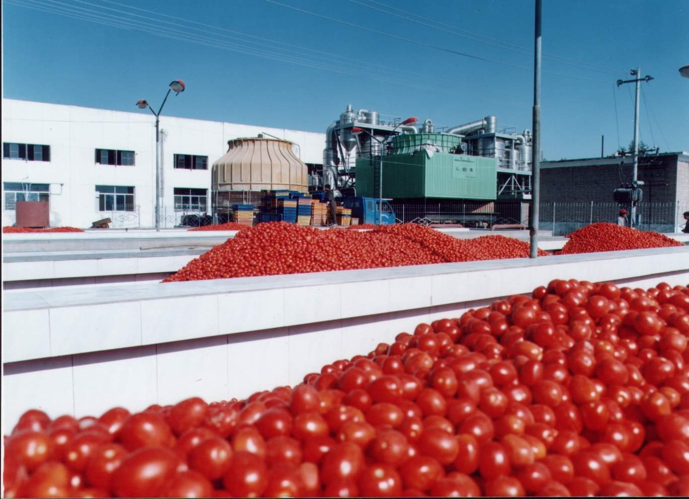 Tomato - FG Announces New Policy to Boost Tomato Production In Nigeria