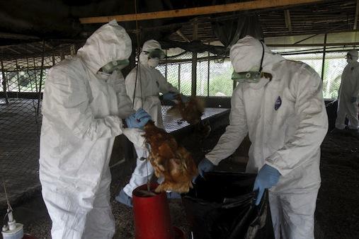 Photo of FG Alerts Nigerians On Bird Flu Outbreak In Seven States