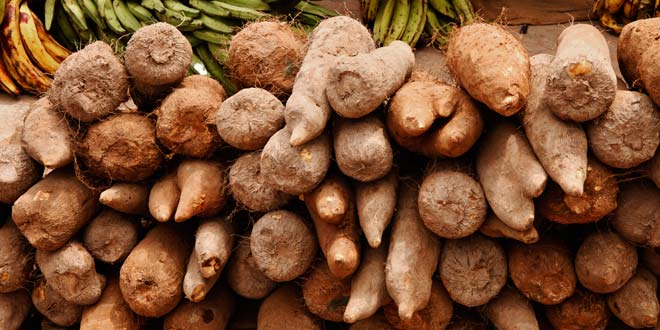 yam - Nigeria to Officially Begin Exportation of Yams to UK, U.S