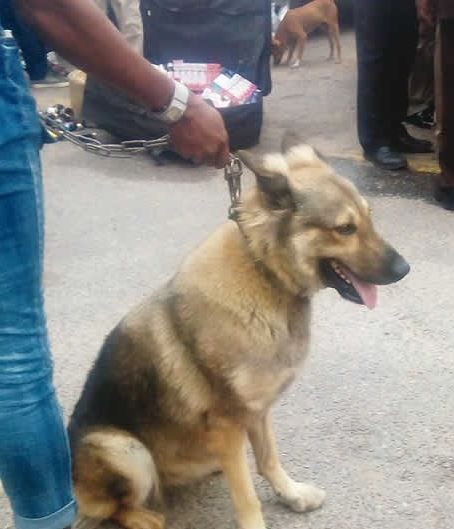 Photo of PHOTO: Lagos State Police Arrest 'Bullet' The Dog and Owners For Robbery