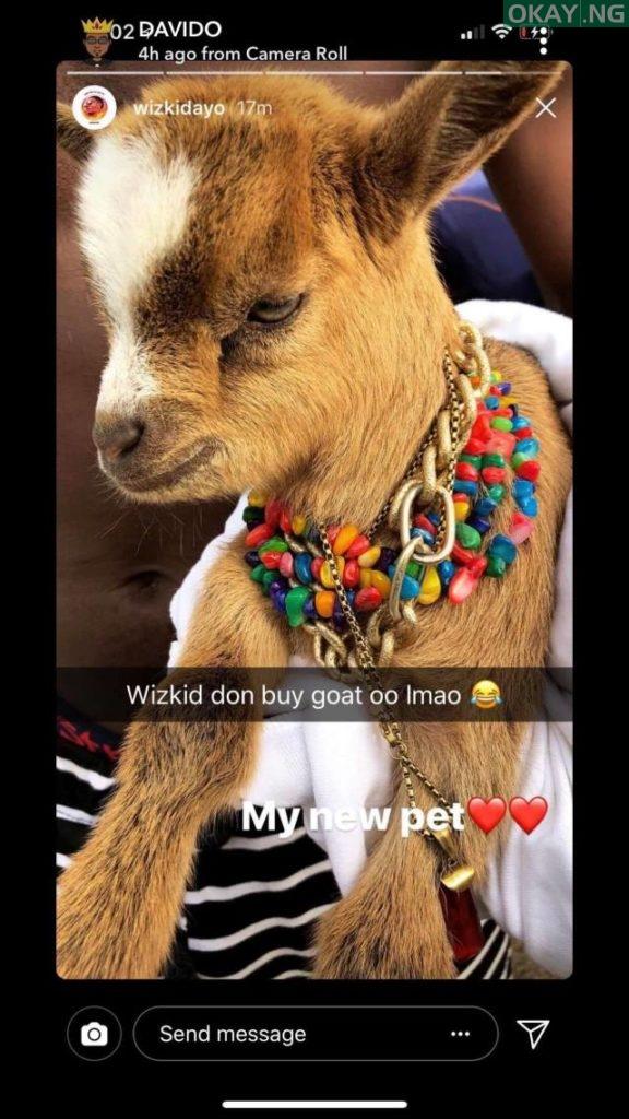 28584364 10215400390788894 1927936001 o 576x1024 - Photo: Davido react to Wizkid's new pet goat