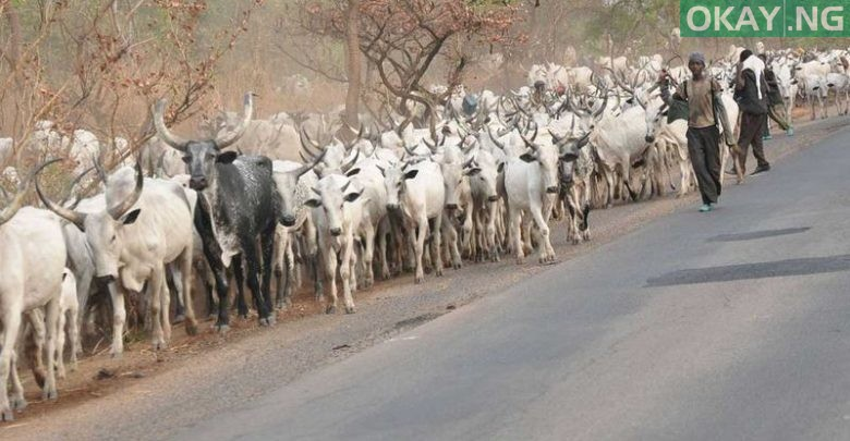 Photo of Recent Killings In Plateau State Is 'Retaliatory' for 300 Missing Cows – Miyetti Allah