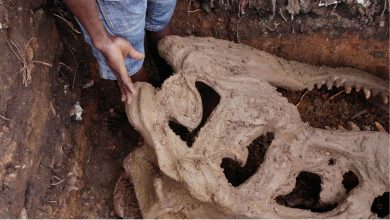 Mowe discovery 1 390x220 - PHOTOS: Construction Workers Discover Strange Bones in Ogun