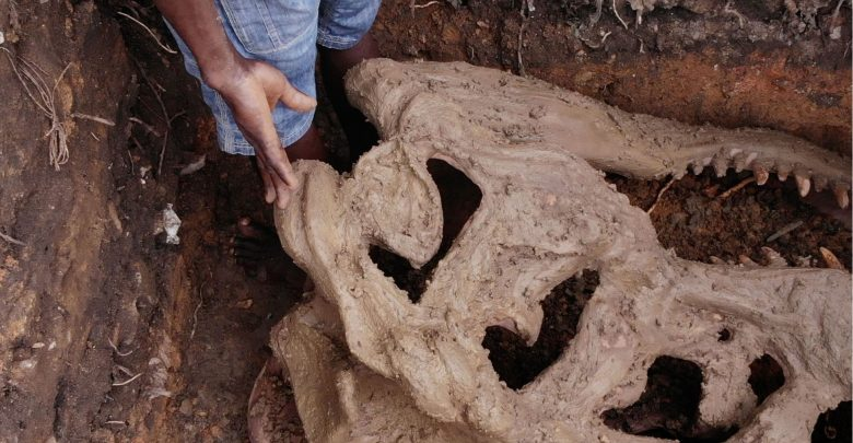 Photo of PHOTOS: Construction Workers Discover Strange Bones in Ogun
