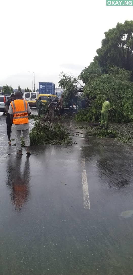 Lagos tree fall Okay ng 3 - Heavy morning rainfall causes flood, uproots trees in Lagos [Photos]