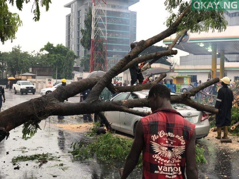 Lagos tree fall Okay ng 6 - Heavy morning rainfall causes flood, uproots trees in Lagos [Photos]